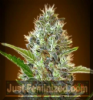 Advanced Auto Somango Female 3 Cannabis Seeds